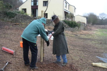 First tree planted in Llanblethian Orchards
