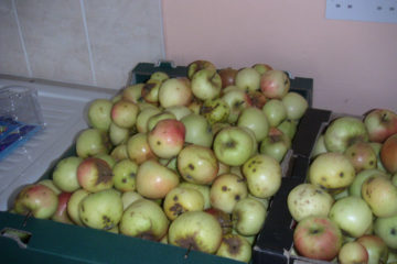 First apples I ever pressed from my mothers apple tree in cowbridge.