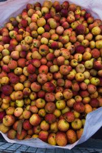 Dabinett apples