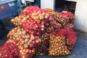 Mid season apples from Llanblethian orchard
