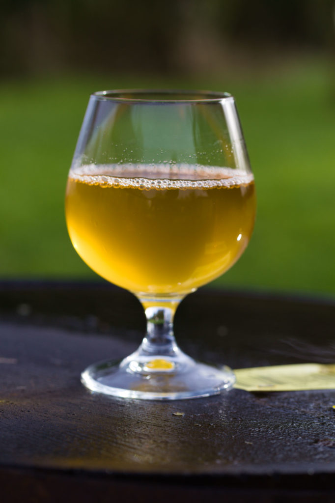 Craft Cider Glass Llanblethian Orchards