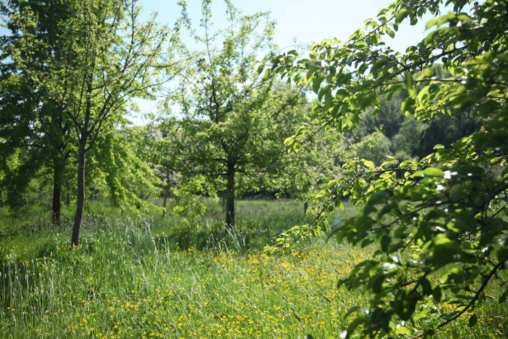 2 Photograph of the orchard today