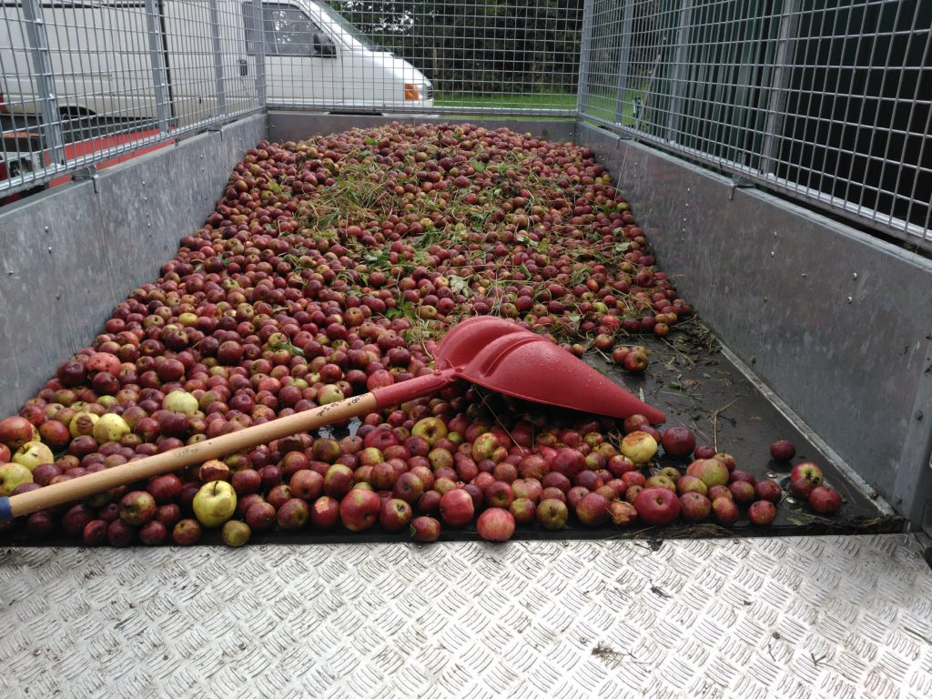 8 Shovelling apples